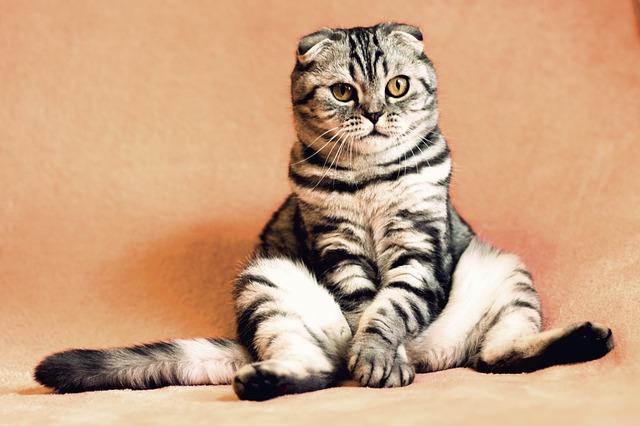 super kočka.jpg