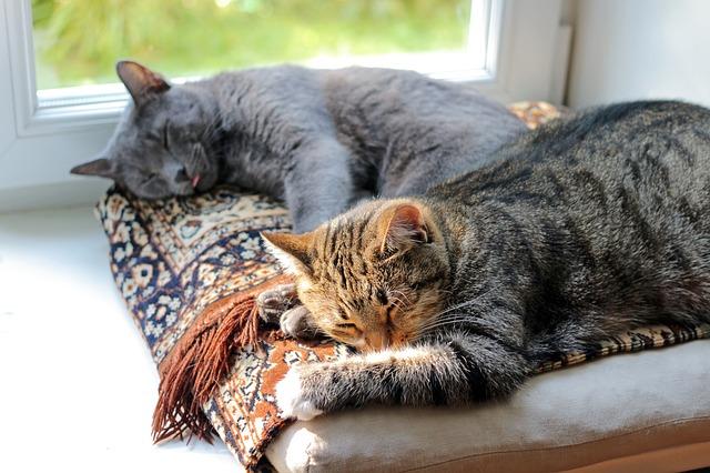 spánek koček.jpg