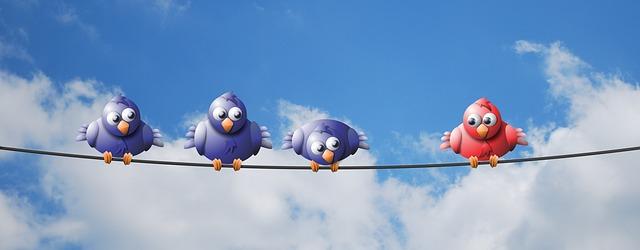 ptáčci na drátě