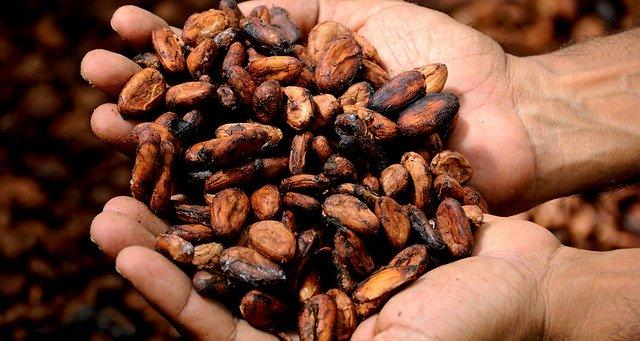 Kakaové boby.jpg